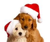 Feliz Natal 6.JPG